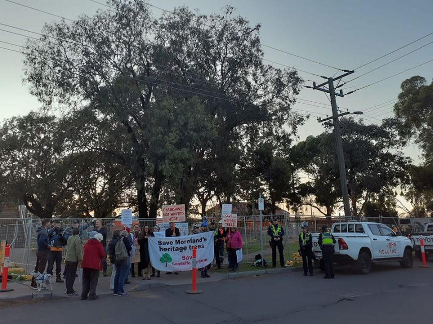 Gandolfo Gardens trees axed despite vocal community protest